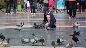Pigeons de alimentation mignons de Little Boy banque de vidéos