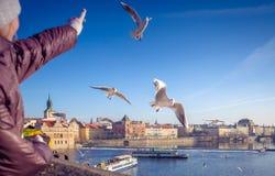 Pigeons de alimentation, Prague, République Tchèque Images libres de droits