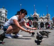 Pigeons de alimentation de touristes de femme dans la place - le St marque la place - Photo libre de droits