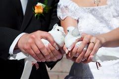 Pigeons de mariage Photographie stock libre de droits