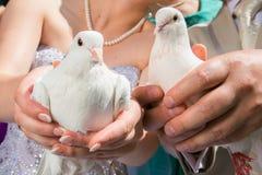 Pigeons de mariage Photo libre de droits