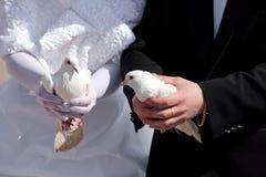 Pigeons de mariage dans des mains du marié et du brid Images libres de droits