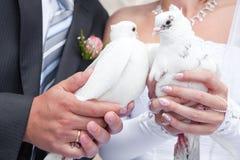 Pigeons de mariage dans des mains du marié et du brid Image libre de droits