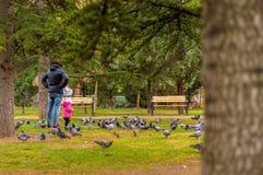 Pigeons de observation de mère et de fille en parc public avec des pins et des bancs Images stock