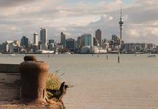 Pigeons de poursuite avec l'horizon d'Auckland Photographie stock
