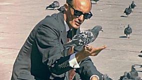 Pigeons de San Marco banque de vidéos