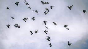 Pigeons de vol en ciel nuageux Image libre de droits
