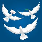 Pigeons de vol réglés Photo libre de droits