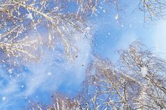Pigeons de vol sur le fond de ciel bleu Vue inférieure Photos stock