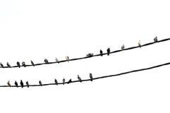 Pigeons - Dove Royalty Free Stock Photos
