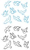 Pigeons and doves birds Royalty Free Stock Photos