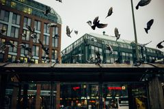 Pigeons Doves City Stock Photos