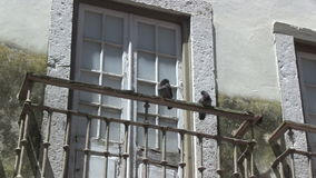 Pigeons in downtown Lisbon, Portugal. Pigeons on a balcony in downtown Lisbon, Portugal stock video footage
