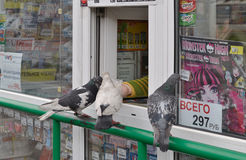Pigeons drop in newsstand. Stock Photo