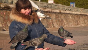 Pigeons eat with the hands of a woman stock footage