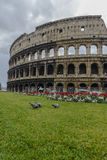 Pigeons eating in front of the Colosseum Royalty Free Stock Photography