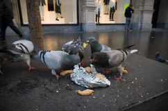 Pigeons eating Stock Images