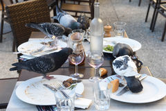 Pigeons eating at a restaurant. Table Stock Photos