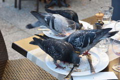 Pigeons eating at a restaurant Stock Photo