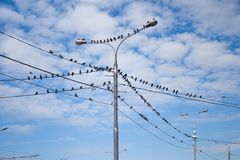Pigeons on electric pole Royalty Free Stock Photo