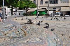 Pigeons en Chypre Photo libre de droits