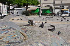 Pigeons en Chypre Photo stock
