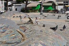 Pigeons en Chypre Images libres de droits