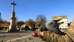 Pigeons en main dans la place de ville banque de vidéos