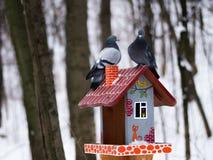 Pigeons en parc d'hiver Photographie stock