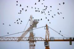 Pigeons et grues Photo stock