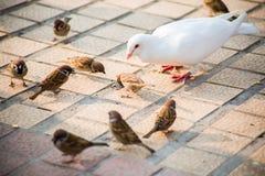 Pigeons et moineaux Photographie stock