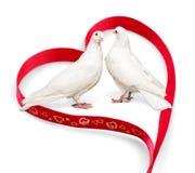 Pigeons et ruban de couples Photos libres de droits