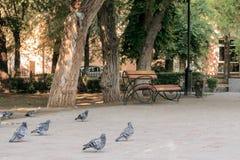 Pigeons et un banc en parc de ville images stock