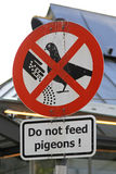 Pigeons feed Royalty Free Stock Photography