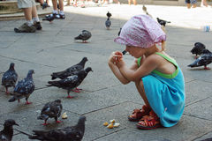Pigeons feeding. Little girl feed the city pigeons Stock Image