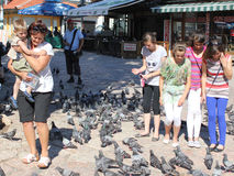 Pigeons feeding in Sarajevo, Bosnia and Herzegovina Royalty Free Stock Image