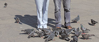 Pigeons 3. Feeding the pigeons at st. mark's square in venice italy Stock Images
