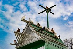 Pigeons. Flock of pigeons on the roof building. Pigeons. Flock of pigeons on the roof building Stock Photography