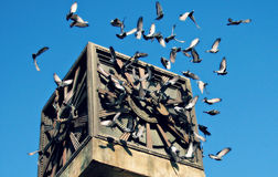 Pigeons Fly Around Baku Clock Tower Royalty Free Stock Images
