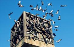 Pigeons Fly Around Baku Clock Tower royalty free stock images