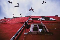 Pigeons fly on the facade of the old red house in old town. Rovinj, Croatia stock photos