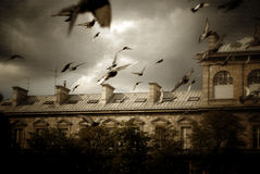 Pigeons Flying Stock Photography