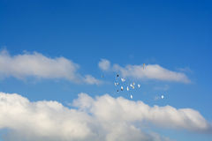Pigeons flying, blue sky, white clouds p7 Royalty Free Stock Photography