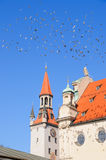 Pigeons flying over roofs of Munich Stock Images