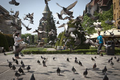 Pigeons flying at Unirii square in Timisoara, Romania. TIMISORA, ROMANIA - MAY, 4: Pigeons flying at Unirii square in Timisoara, Romania on May 4, 2013 Royalty Free Stock Photos
