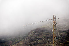 Pigeons in the fog Royalty Free Stock Image