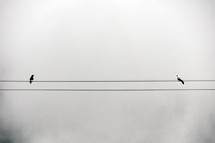 Pigeons in the fog Royalty Free Stock Photography
