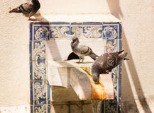Pigeons on the fontain Stock Photography