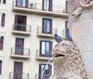 Pigeons on a fountain Stock Photos