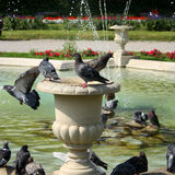 Pigeons on a fountain Royalty Free Stock Photo
